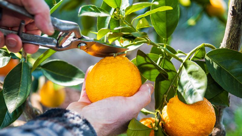 As-5-melhores-práticas-para-o-cultivo-de-citros