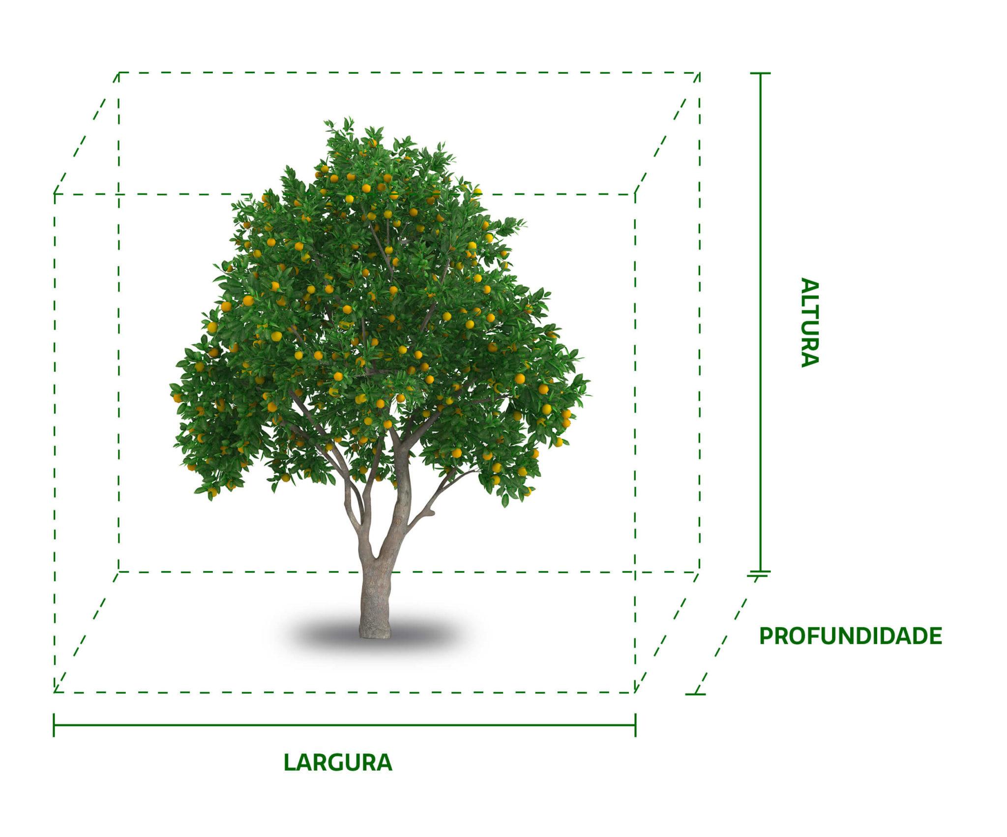 GRANBLACK Fertilizante Foliar Organomineral Premium Como Calcular a Cubicagem da Planta de Citrus